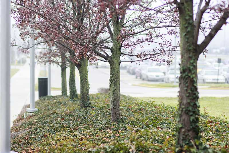 Trees+on+campus.+They%27re+meant+to+%27soften+the+look%27+of+NKU.+