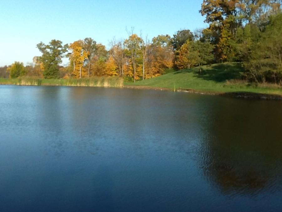 Aside from the two plots of produce at McCoy's farm, there is also a pay fishing lake. Locals come to McCoy's farm for quality water to fish in.