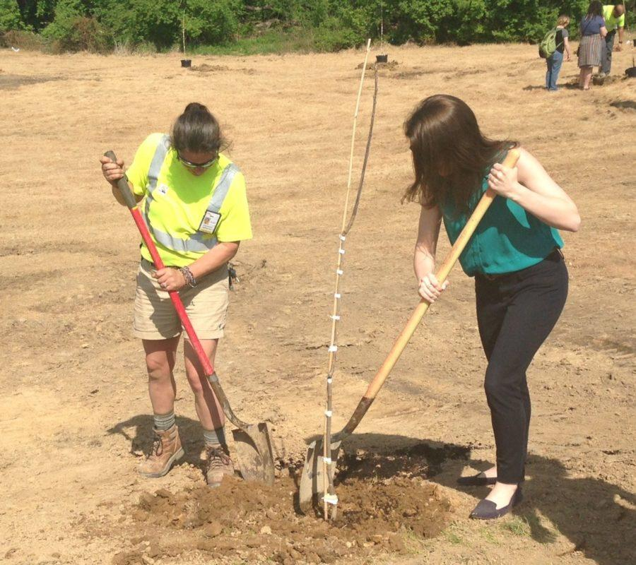 Tess Phinney, sustainability director, thinks that having the Community Garden is a great start to build a greener community. She plants her first ever tree, an American Persimmon.