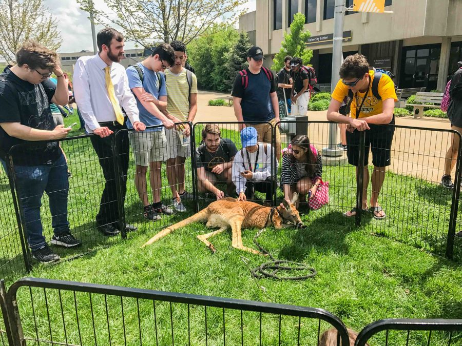 Students gather to check out a kangaroo in the Student Union Plaza