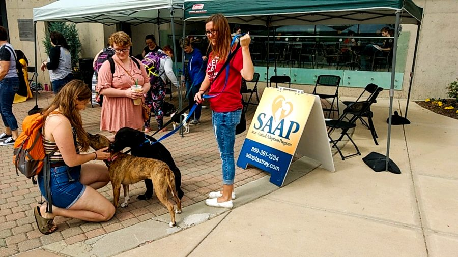 SAAP was set up in the Student Union Plaza to promote their dogs that are up for adoption