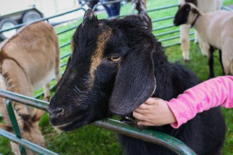 GALLERY: Activities Programming Board brings petting zoo to campus