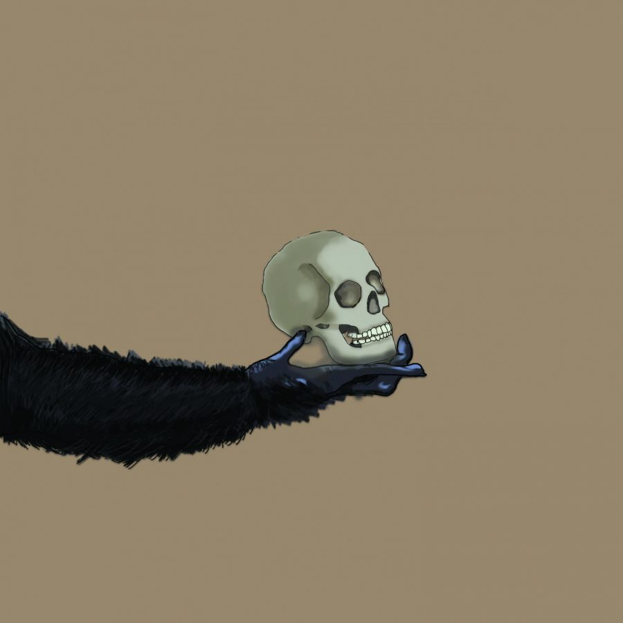No Bones About It: Evolutionary Studies is Skeletons of Fun